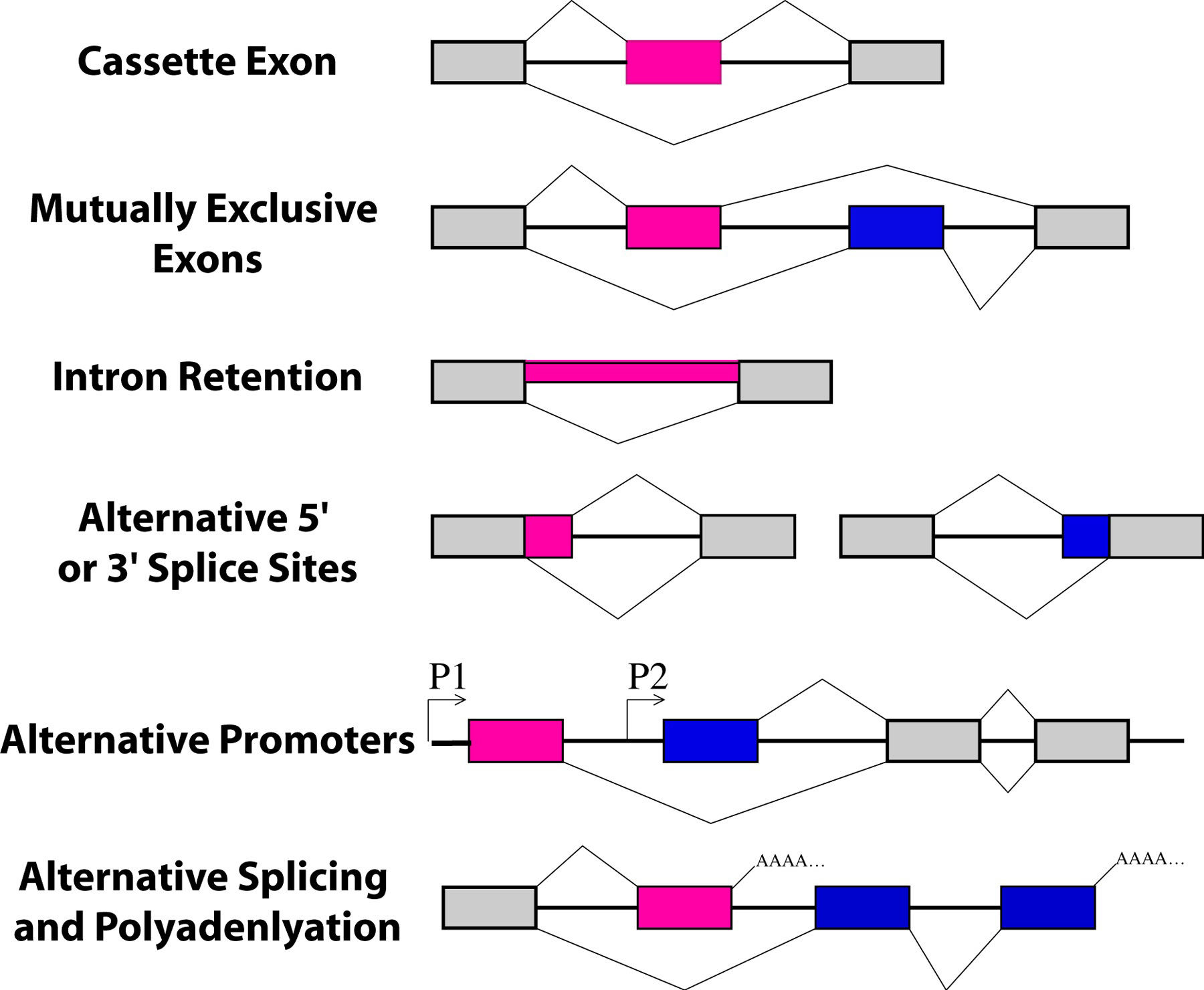 relationship between introns exons and rna splicing steps