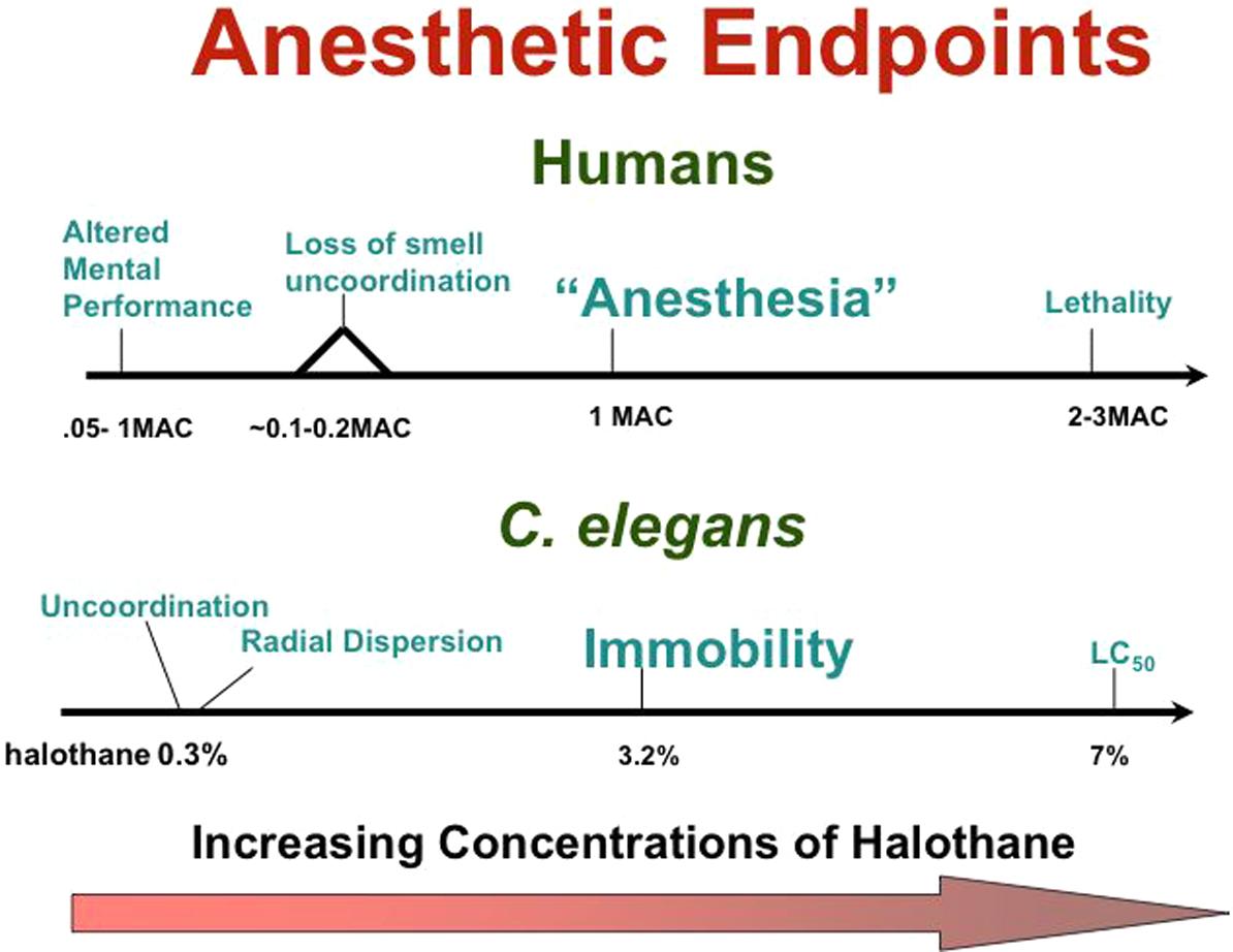 anesthesia movie plot
