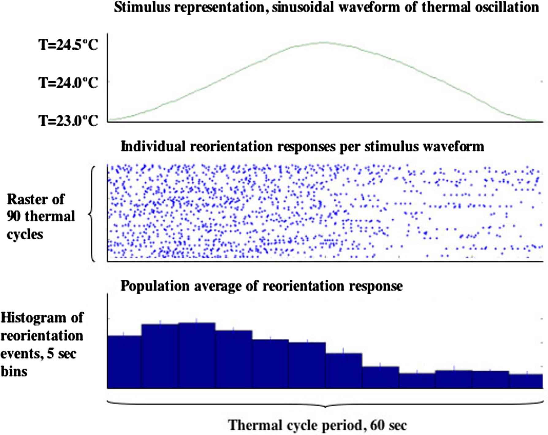 WormBook Behavior figure 7