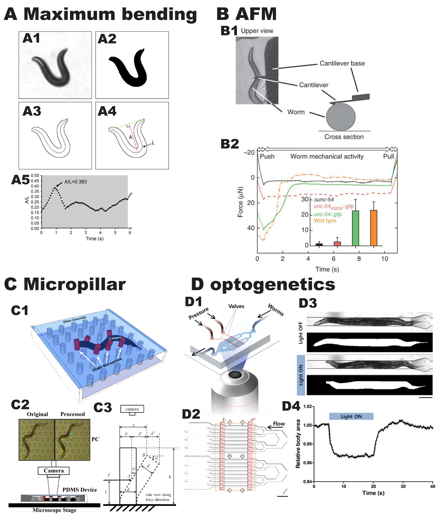 Recently Reported Methods To Assess The Locomotion And Force Generated By C Elegans A Measurement Of Maximum Bending Amplitude A L As A Worm Moves