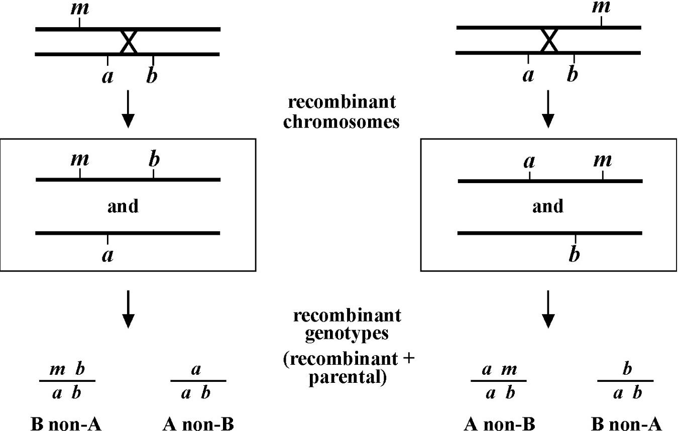 Classical Genetic Methods