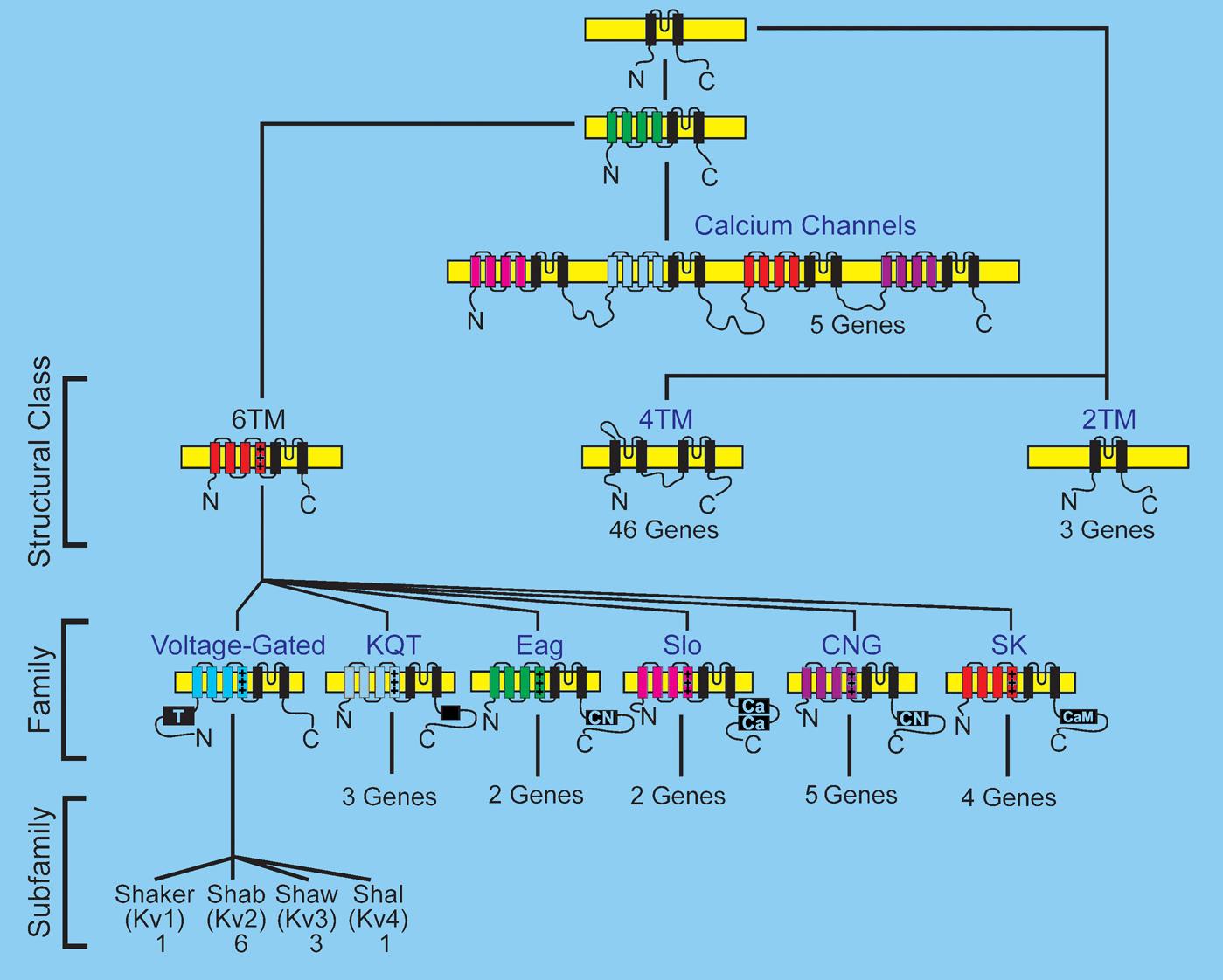 The neuronal genome of Caenorhabditis elegans
