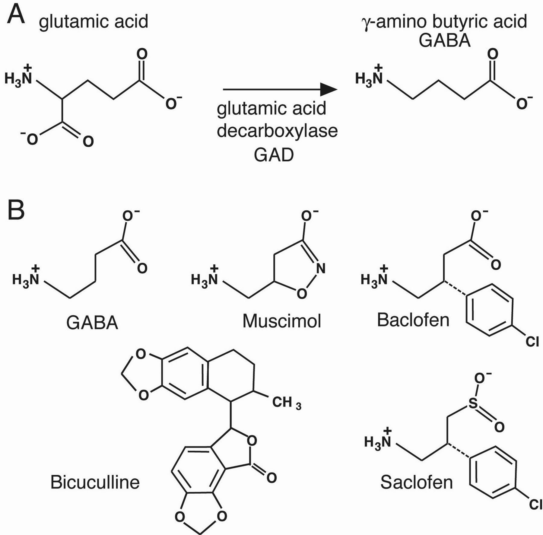 glutamate decarboxylase