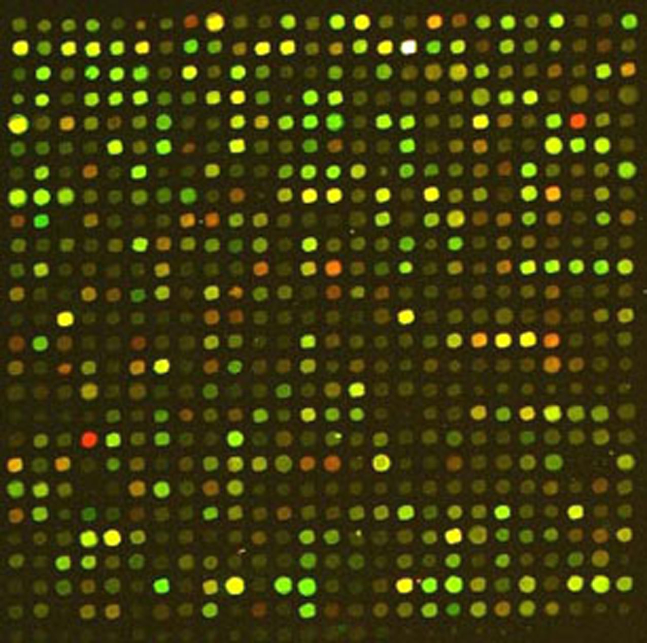 dna microarray mien