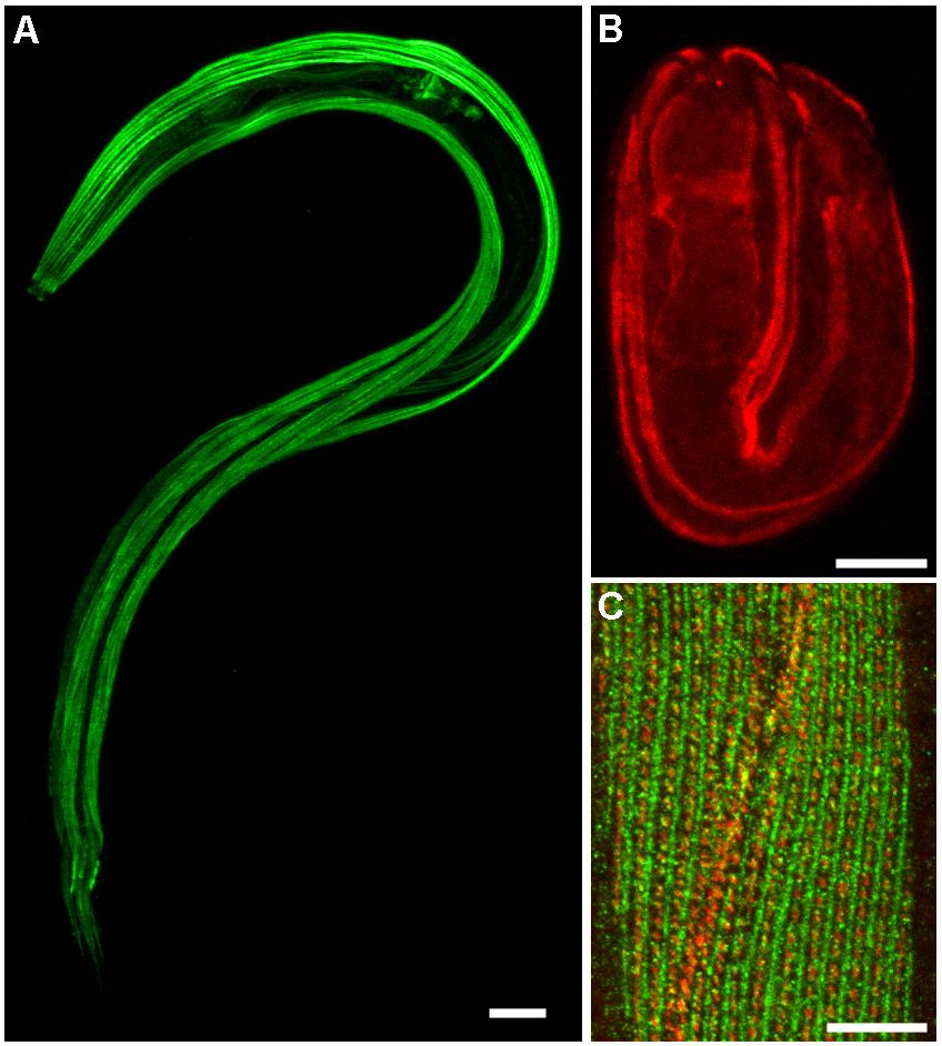 download in situ electron microscopy