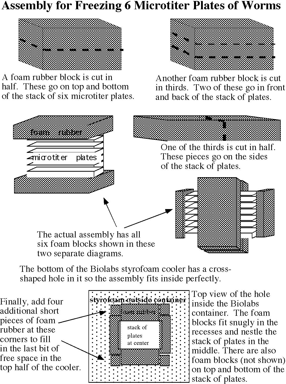 Reverse Genetics Ladder Logic Diagram For Bottle Filling System Figure 2