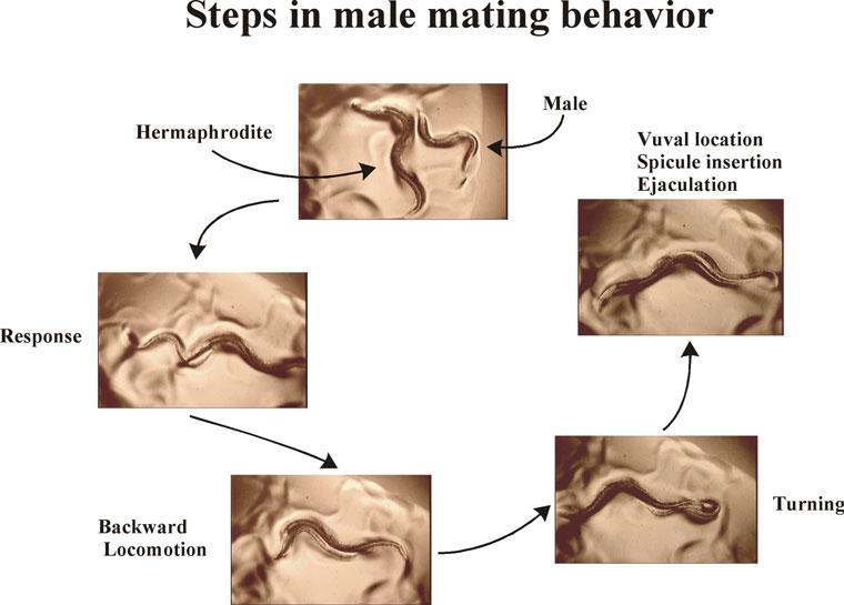 Mating Press