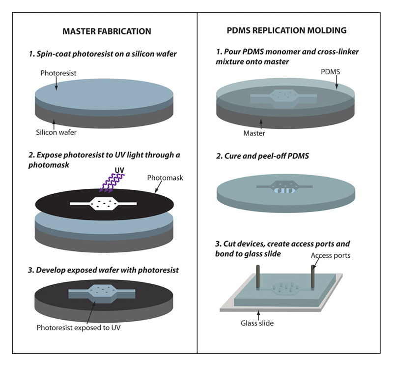 Microfluidics As A Tool For C Elegans Research